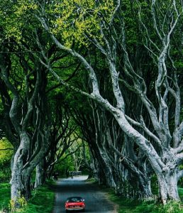 Dark Hedges Ireland Game of Thrones setting