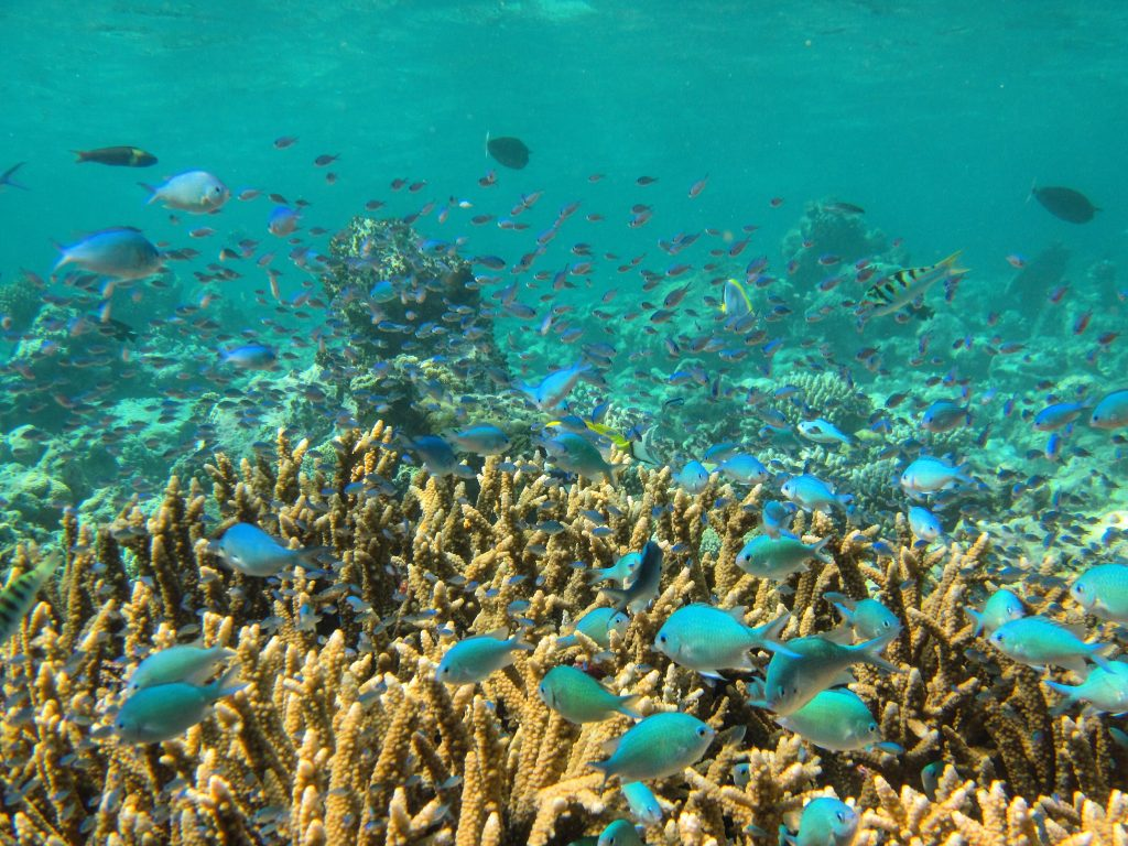Wonderful underwater life: amazing coral reef and colourful fish